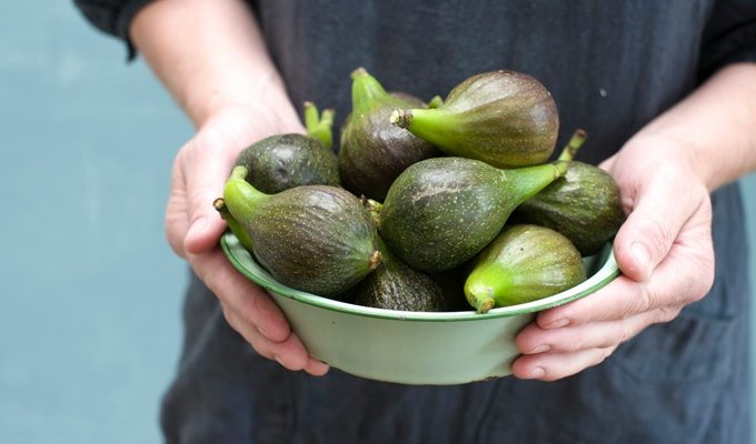 bowl of mums figs 680