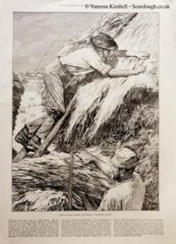 1886 – Thatching – UK