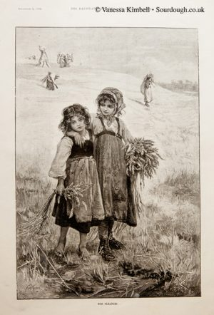 1891 – Harvest cleaners – UK