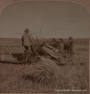 1900 – Harvesting - Monitoba, Canada