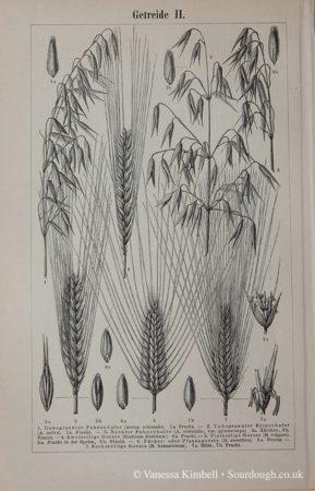 1902 – Wheat, Oats, Durum, Spelt, Emmer - UK