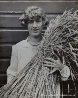 1929 – Wheat – USA