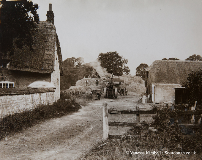 1930 – Wiltshire harvest – UK