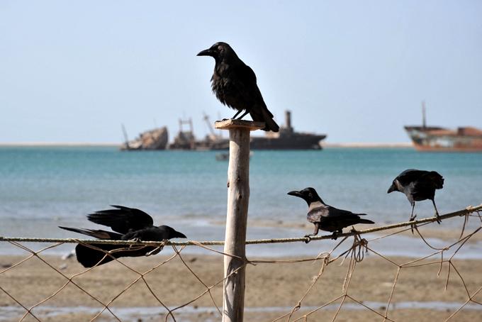 birds near tres hombres