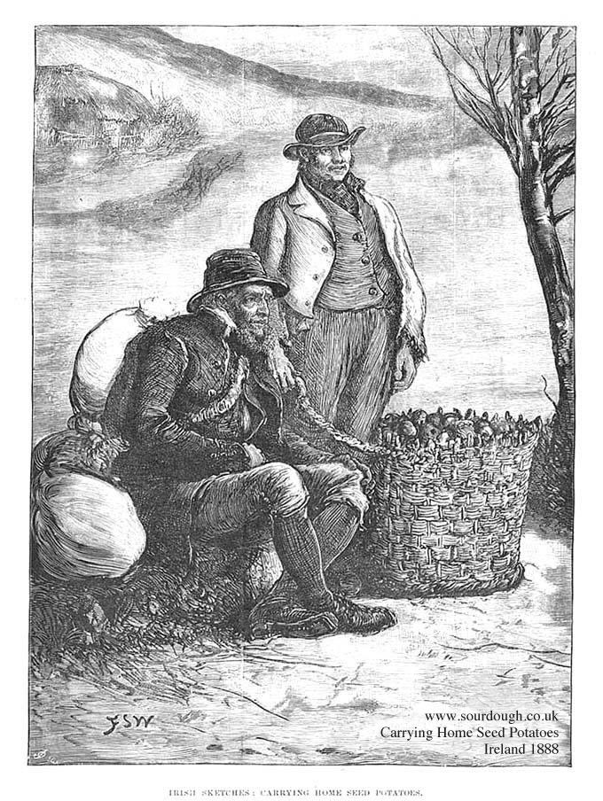 potato 1888