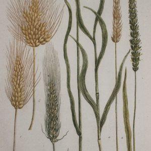 How bread has come full circle – John Letts Lammas Fayre Flour