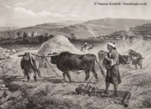 1875 – Fertile crescent – Syria