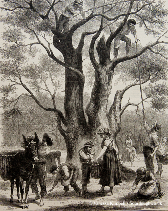 1882 – Olive harvest