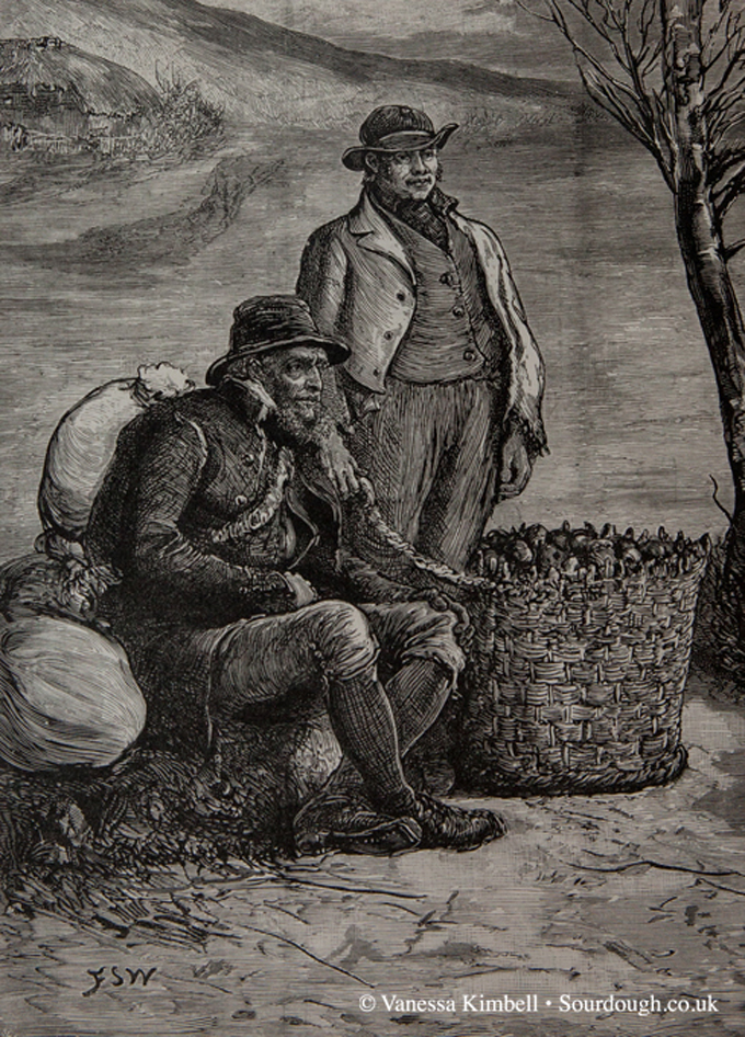 1888 – Potatoes – Ireland