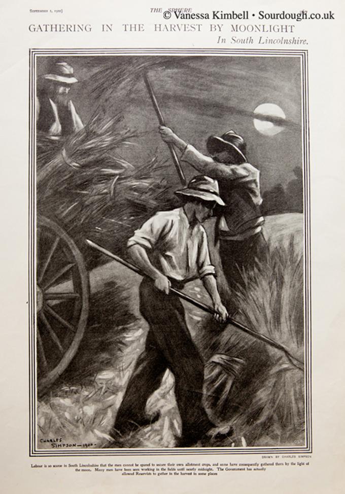 1900 – Harvest – Lincolnshire, UK