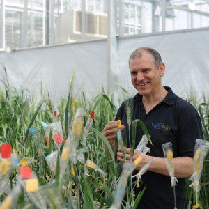The future of bread – Heritage wheat