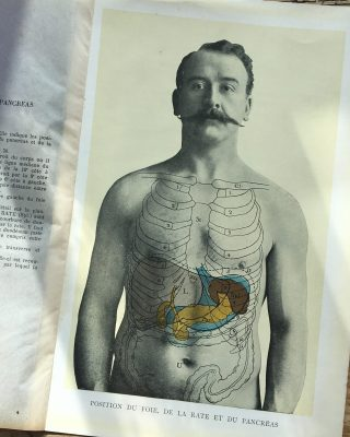 1900's French Digestive system picture.