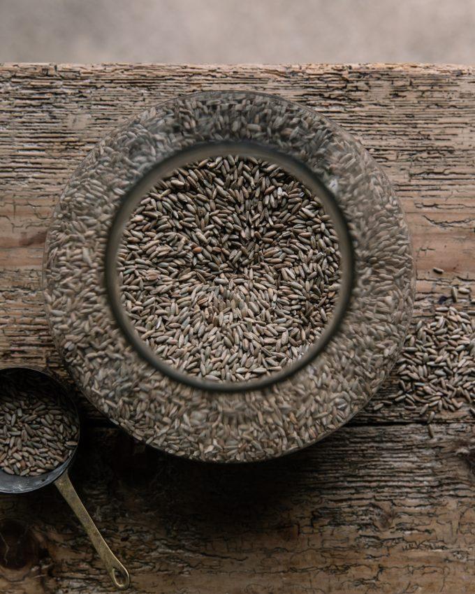 Rye Grain in a Jar