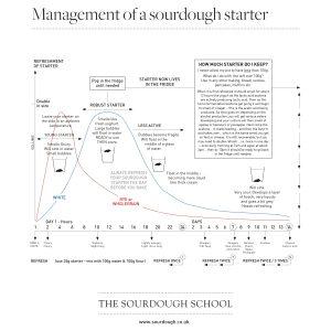 Understanding Sourdough Starter
