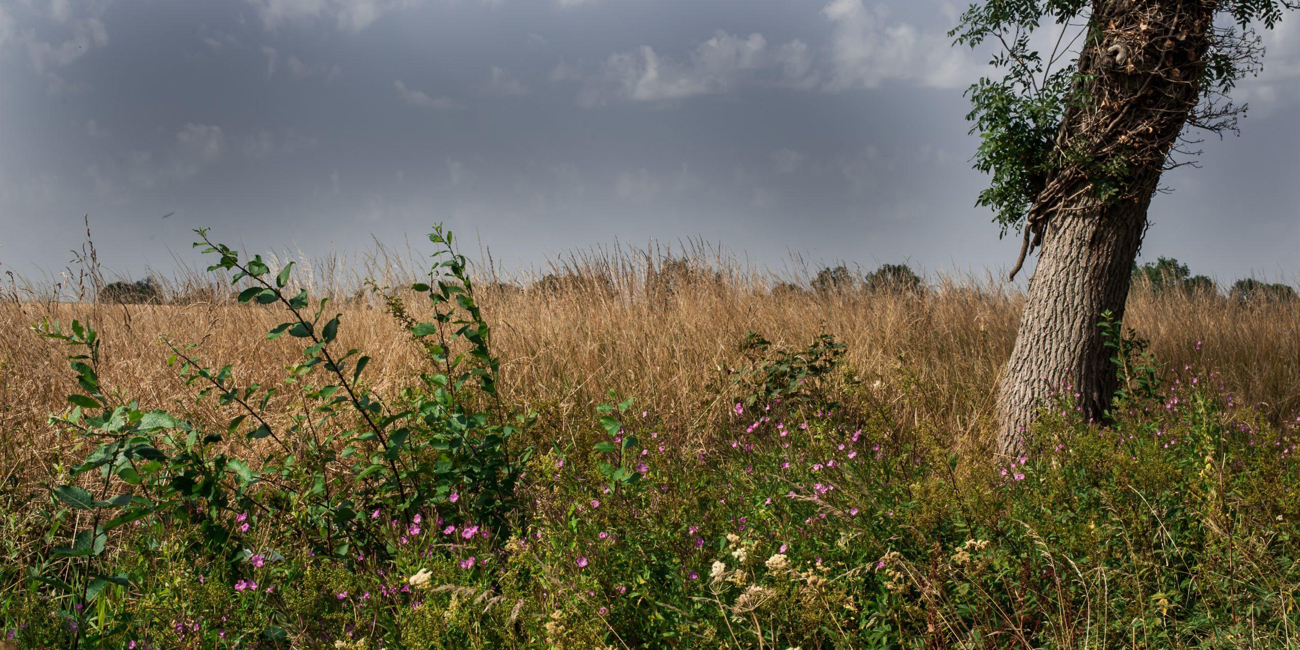 Meadow Blend